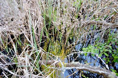wetlands_11
