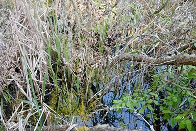 wetlands_09