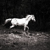 Tiny Dancer<br /> Wild Apache Horse<br /> <br /> Rachael Waller Photography NEW 2009<br /> A portion of proceeds will be donated to Wild horses in need.