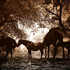 The Whispering Tree<br /> <br /> Rachael Waller Photography