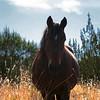 American Beauty<br /> 3 strikes ranch survivor<br /> Mustang