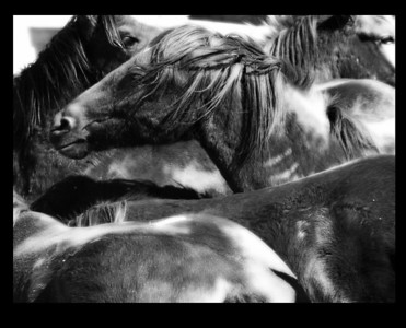 Wild & Domestic Horse Work 2010 - ?