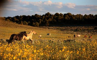 Happy in the fields Stiles & Jefito Rachael Waller Photography Wild Horses
