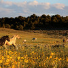 Happy in the fields<br /> Stiles & Jefito<br /> Rachael Waller Photography<br /> Wild Horses