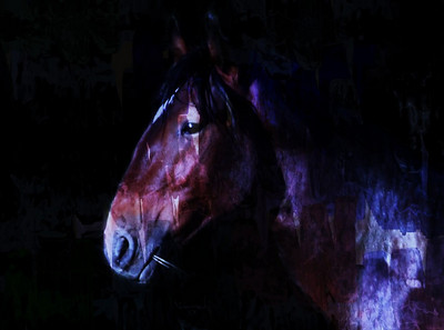 """"""" In the full moon light, he comes to take my herd""""  Jicarilla wild horse 2007"""