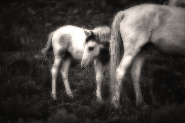 Placitas Wild horses Rachael Waller Photography