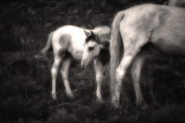 Placitas Wild horses<br /> Rachael Waller Photography