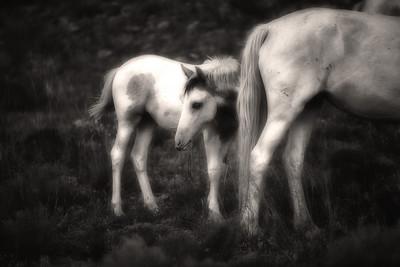 Placitas Wild horses Rachael Waller Photography