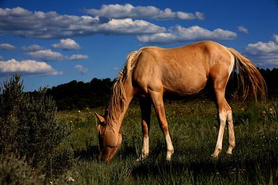 Jefita Wild colt (Stiles adopted him as a son). Rachael Waller Photography 2010