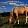 Jefita Wild colt<br /> (Stiles adopted him as a son).<br /> Rachael Waller Photography<br /> 2010