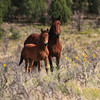 The Protector<br /> Wild Horses<br /> Rachael Waller Photography<br /> A head stallion guards his spring colt while keeping an eye on my lens.