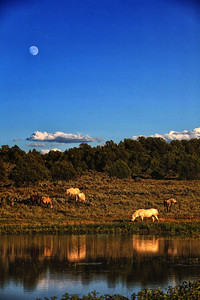 Moon. Water. Horses  Rachael Waller Photography Wild horses