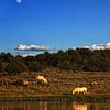 Moon. Water. Horses<br /> <br /> Rachael Waller Photography<br /> Wild horses