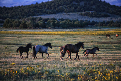 On the move Rachael Waller Photography wild horses