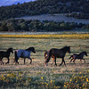 On the move<br /> Rachael Waller Photography<br /> wild horses
