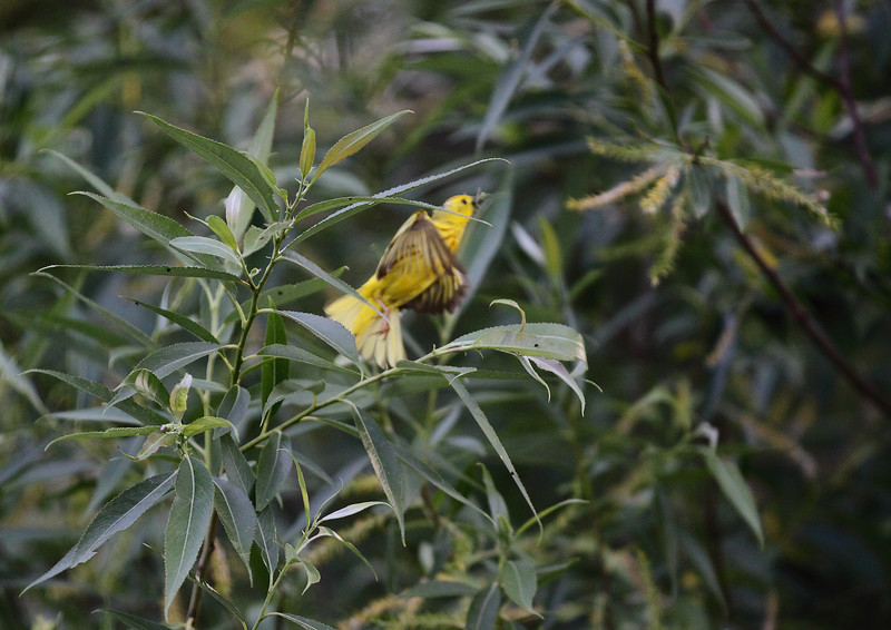 bird _MG_3035