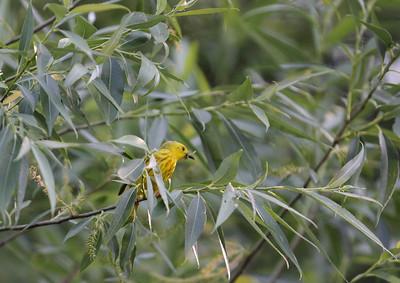bird _MG_3038