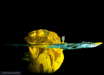 sunflower splash w mini wave 2564