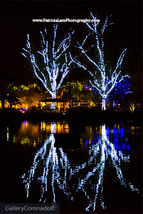 white lights tree reflection 2127PatL
