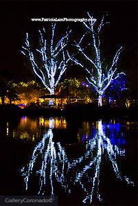white lights tree reflection 2127PatL