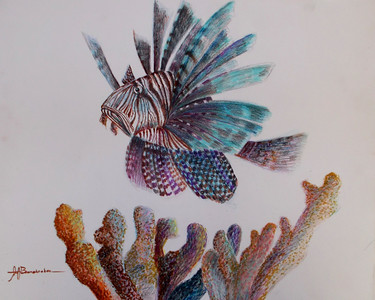 "Lionfish 14""x17"" Colored Pencil and Felt Pen on Bristol Board This was a demo piece for my drawing class. To see othere ocean animals check out the Sea Life Gallery"