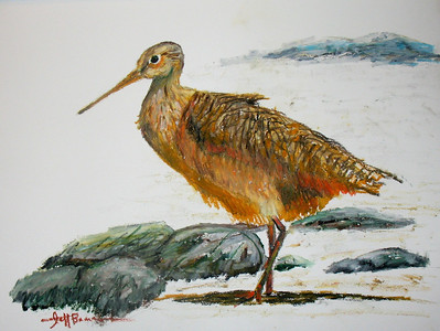 "Godwit 11""x14"" Oil Pastel on Bristol Board"