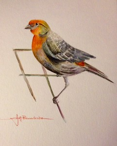 "Redheaded Finch 11""x14"" Watercolor Pencil on Fluid 140lb. W/C Pencil"