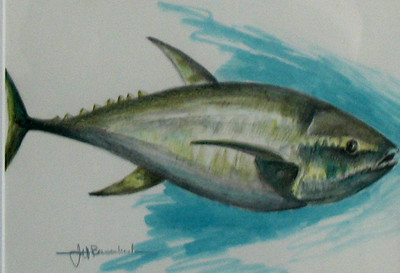 "Tuna! 9""x12"" Graphitint on Bristol Board Private Collection"