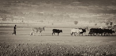 Rural Scene Ethiopia