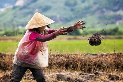 """The Fields of Nha Trang""  A woman working in the field outside of Nha Trang, Vietnam.  © 2011 - Nicole S. Young"