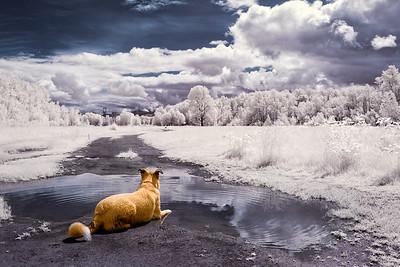 Doggy Daydream
