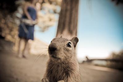 snoopy squirrel  San Diego, CA