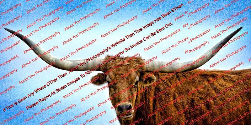 steer 3