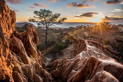Torrey Pines View