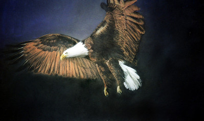 Eagle.  This is one of many drawings that I do 'just to get back into it', that turn out pretty good, albeit without particular thought in composition etc. I think this was the first drawing I did when I got to Canada.