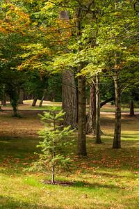 Little Tree in Beacon Hill Park
