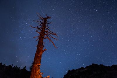Fire glowing tree by Man Eaten lake