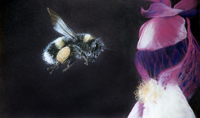 Bee and Orchid.  More studies on the micro world.