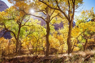 Zion Fall Color