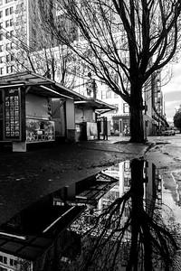 Portland Reflections