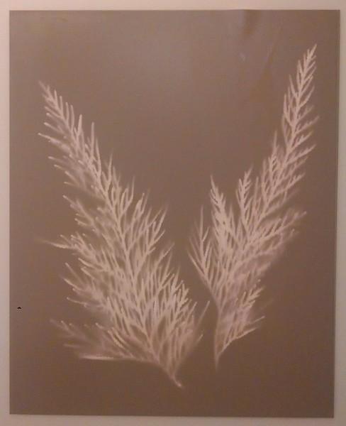 Untoned lumen print