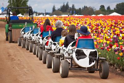 Wooden Shoe Tulip Festival 2012 in Woodburn, Oregon