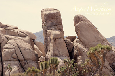 """Loved the """"face"""" on this rock formation in Joshua Tree National Park."""
