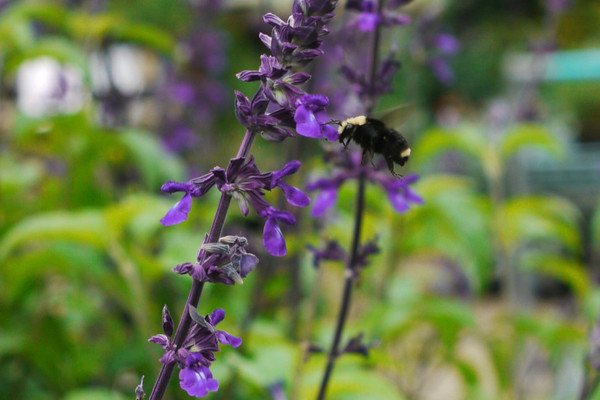 garden of roger 2011-08-13 yashica