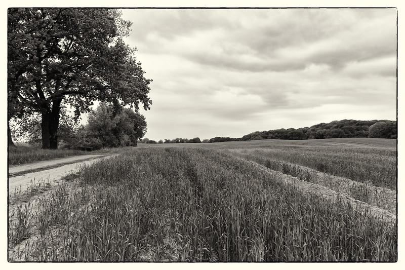 Feldber Seenlandschaft