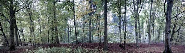 [1] Waldstück, Waldkante, 8 Bilder, L_001429 - L_001432_1 - 4229x1217 - SCUL-Smartblend