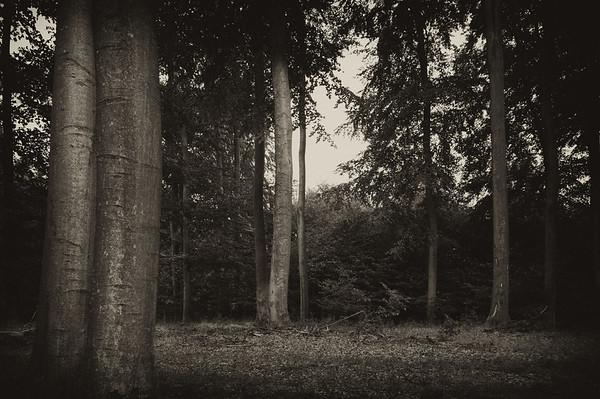 Baumfriedhof 70