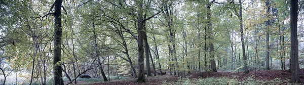 [2] Waldstück, Waldkante, 8 Bilder, L_001437 - L_001440_1 - 4230x1181 - SCUL-Smartblend0000