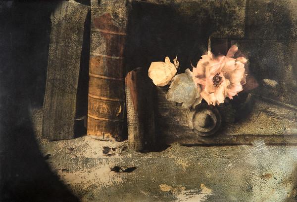 2006 --- Philosopher's Rose by Hugh Shurley --- Image by © Hugh Shurley/Corbis