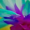 Tropical Blume